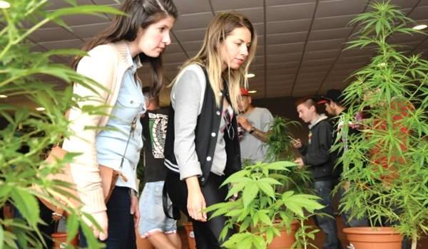 que ver en el museo del cannabis en montevideo